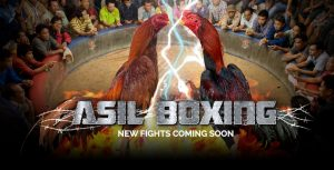 asil-fight